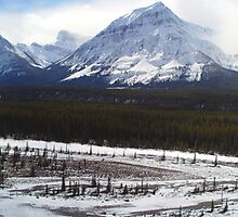 Icefields Panorama, Alberta by aerdeyn
