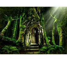 The Emerald Forest Photographic Print