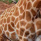 Giraffe Spots by Jenny Brice