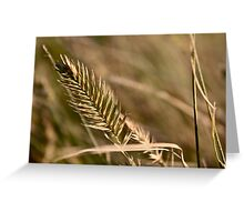 Autumn Grasses Greeting Card