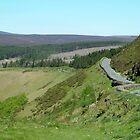 The Winding road by Alan Hogan