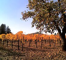 Napa Valley, California by Stephen Laycock