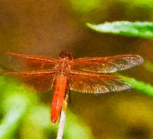 Stylized photo of  red dragonfly on plant in Kit Carson Park in Escondido, CA US. by NaturaLight