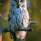 GREAT GRAY OWL by Chuck Wickham