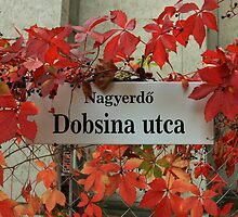 street sign in Debrecen by Andras Harman