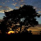 sunset in Johannesburg by danapace