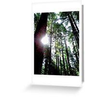 Redwood Sun Streaks Greeting Card