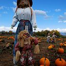 Shopping For The Perfect Pumpkin by Pamela Hubbard