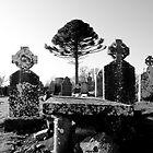 Tree at the Hill of Slane by Daniel Bullock