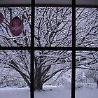 Snow 1 in the Strzeleckis by kbend