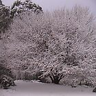 Snow 2 in the Strzeleckis by kbend
