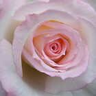 Pink Delight by Michael Jeffries
