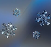 Snowflake collage: crystals of day and night by Alexey Kljatov
