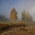 the morning fog by danapace