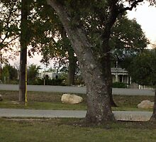 Trees In Baghdad Texas by Sarai