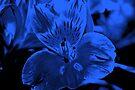 In Blue by Evita