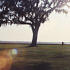live oak on lakefront by Erin Nelson