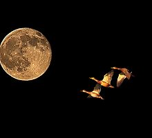 Fly Me To The Moon by Marvin Collins