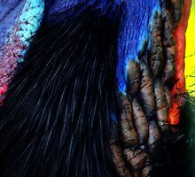 Cassowary neck by Tamara  Kenneally