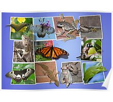 Collage of Australian Native Wildlife Poster