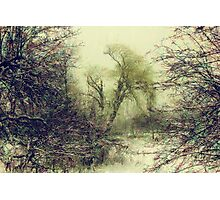 Winter colors Photographic Print