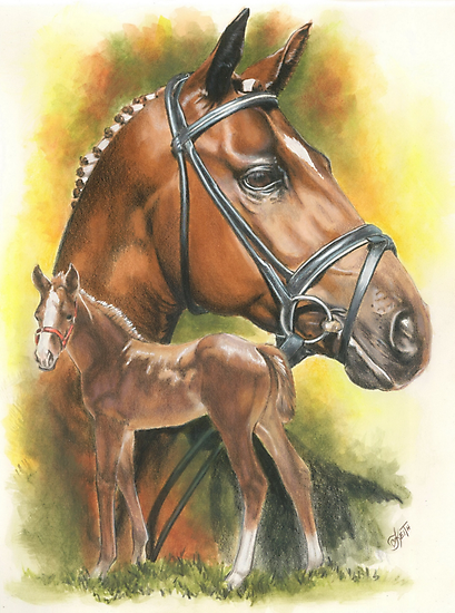 Trakehner by BarbBarcikKeith
