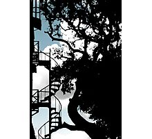 Spiral Stairs & A Live Oak Photographic Print