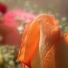 Valentine Joy - 4     ^ by ctheworld
