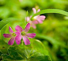 Details of Wild Flora in Taiwan by Jeff Harris