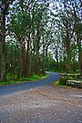 Bowral, Country Road by Evita