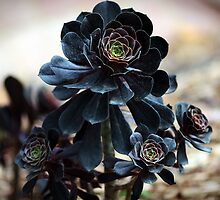 Black Lotus by Reynandi Susanto