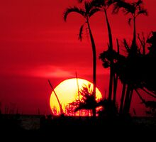 Hot Florida Sunset by NatureGreeting Cards ©ccwri