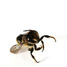 The Bee, Pose 3 by Maureen Kay