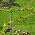 Columbia. Cocora Valley. Cows. by vadim19
