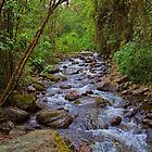 Columbia. Cocora Valley. River. by vadim19