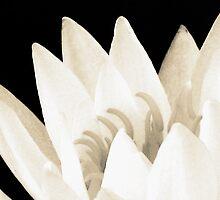 Waterlily by anathema