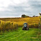 Tractor in the Vineyard by Alison Cornford-Matheson