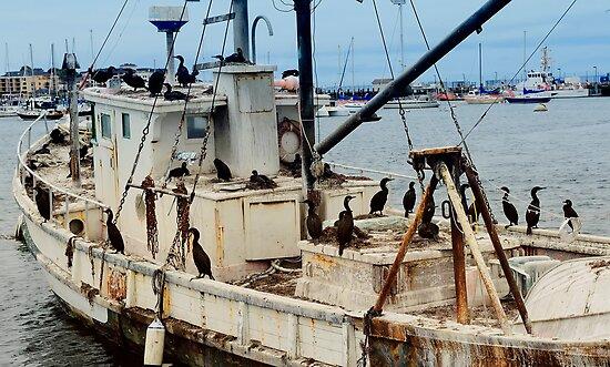 Pirates! by Steve  Buffington