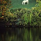 Horse Reflected in Autumn Pond by Anna Lisa Yoder