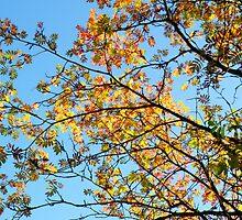 Autumn colours by Annika Strömgren