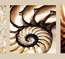 SHELL TRIPTYCH by LacewingDesign