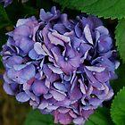 purple by Jeff Stroud