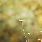 Simple Beauty by Robin Webster