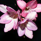 my flowers by HeatherBud
