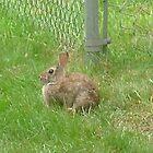 Bunny by worldwideart