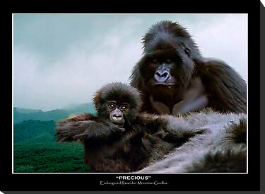 """Precious"" (Mountain Gorillas) by Skye Ryan-Evans"