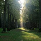 Autumn Sunbeam by Iani