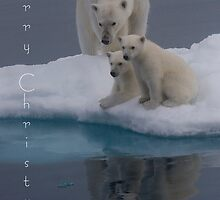 Polar Reflections - Christmas Card by Steve Bulford