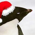 Sleeping Adelie - Christmas Card by Steve Bulford