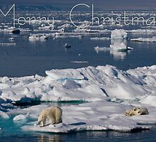 Ice Retreat - Christmas Card by Steve Bulford